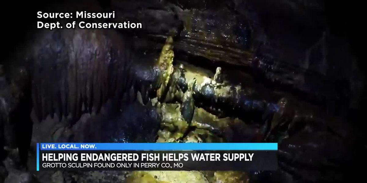 Population 'stable' for endangered fish in Perry County, MO