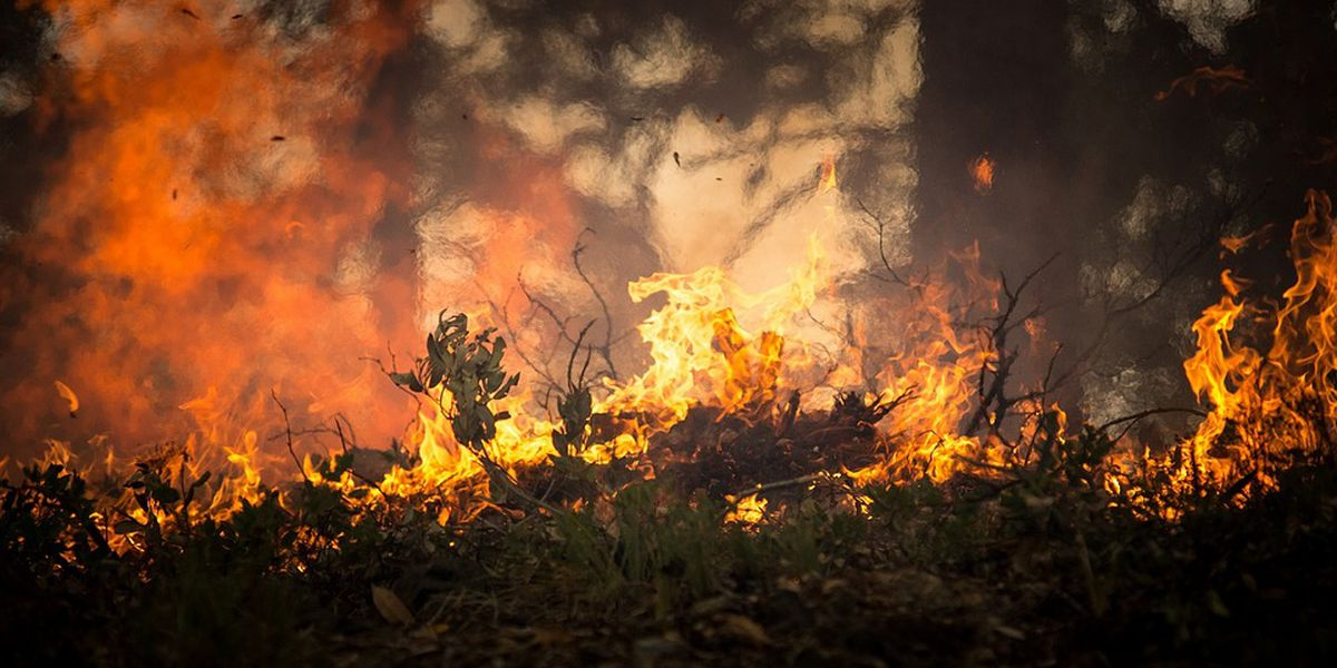 Prescribed burning scheduled for Shawnee National Forest