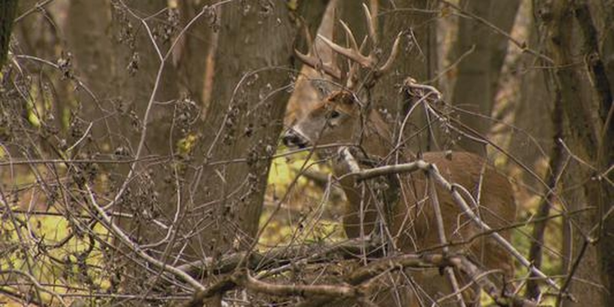 Areas of Rend Lake to close during deer firearm season