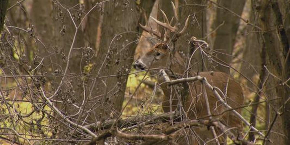 Areas of Rend Lake to close during deer firearm season
