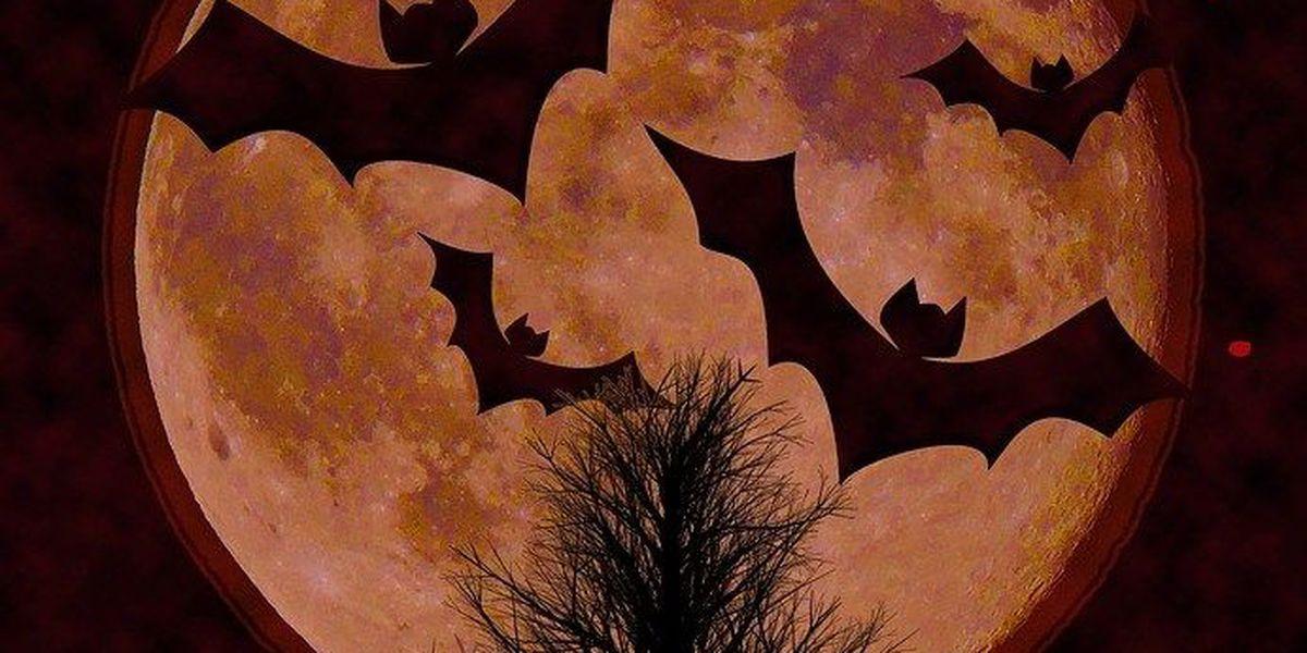 7th annual Halloween Hoopla in Cape Girardeau