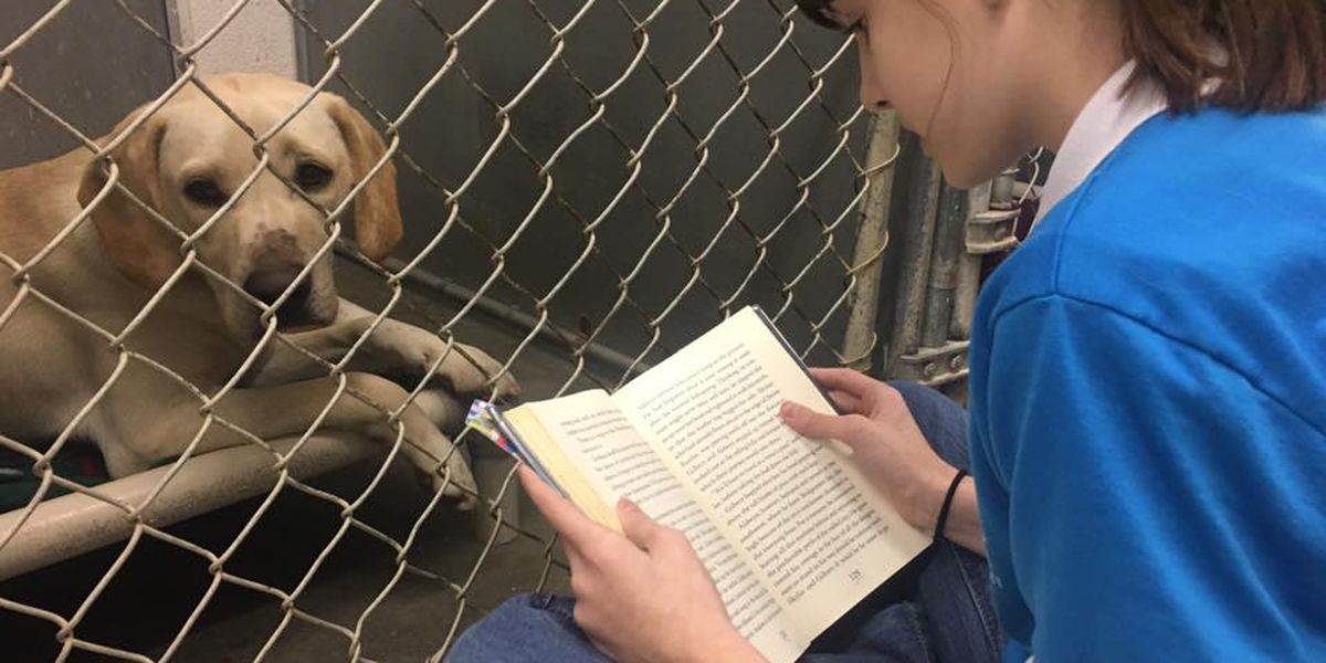 Cape Girardeau students read to shelter dogs and cats