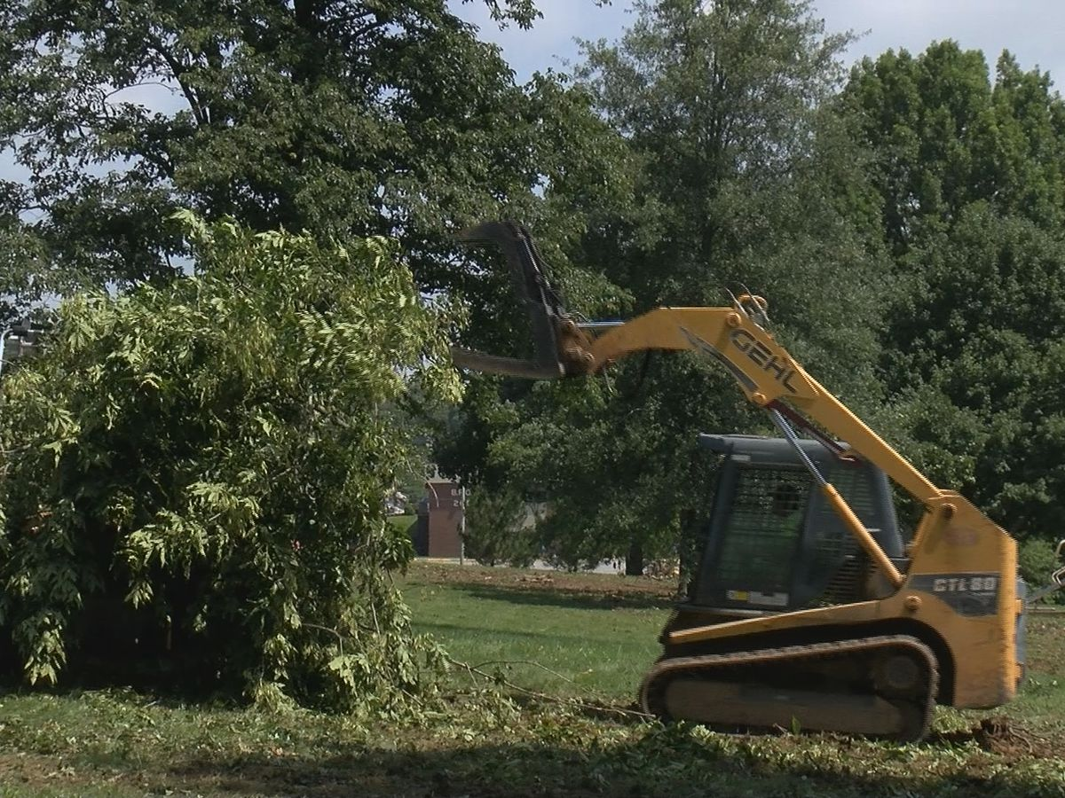 Jackson City Park cleanup won't stop holiday festivities