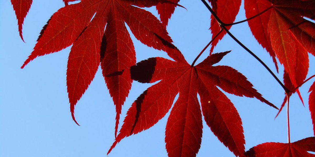 First Alert: Beautiful, calm Fall-like afternoon