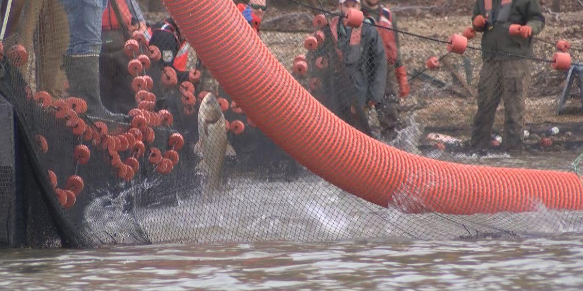 Top Ky. officials tour new method to battle Asian Carp