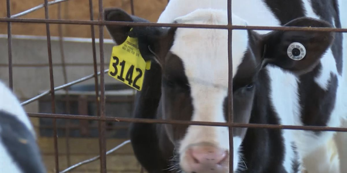 Are farmers in the Heartland being forced to dump milk because of coronavirus closures?