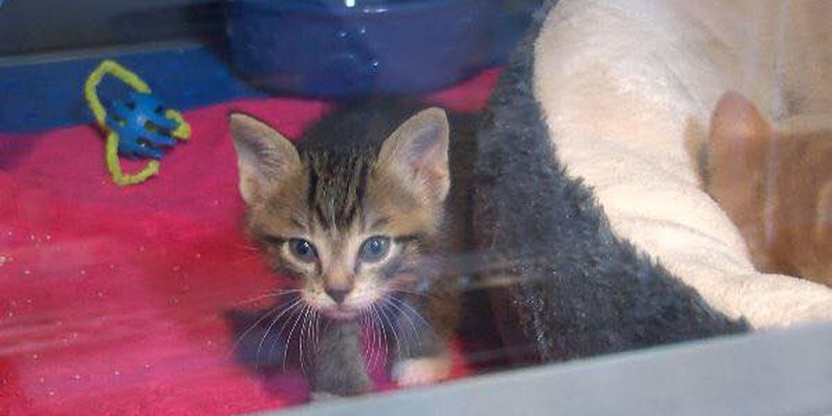 Humane Society of Southeast Missouri working to save 500 animal's lives