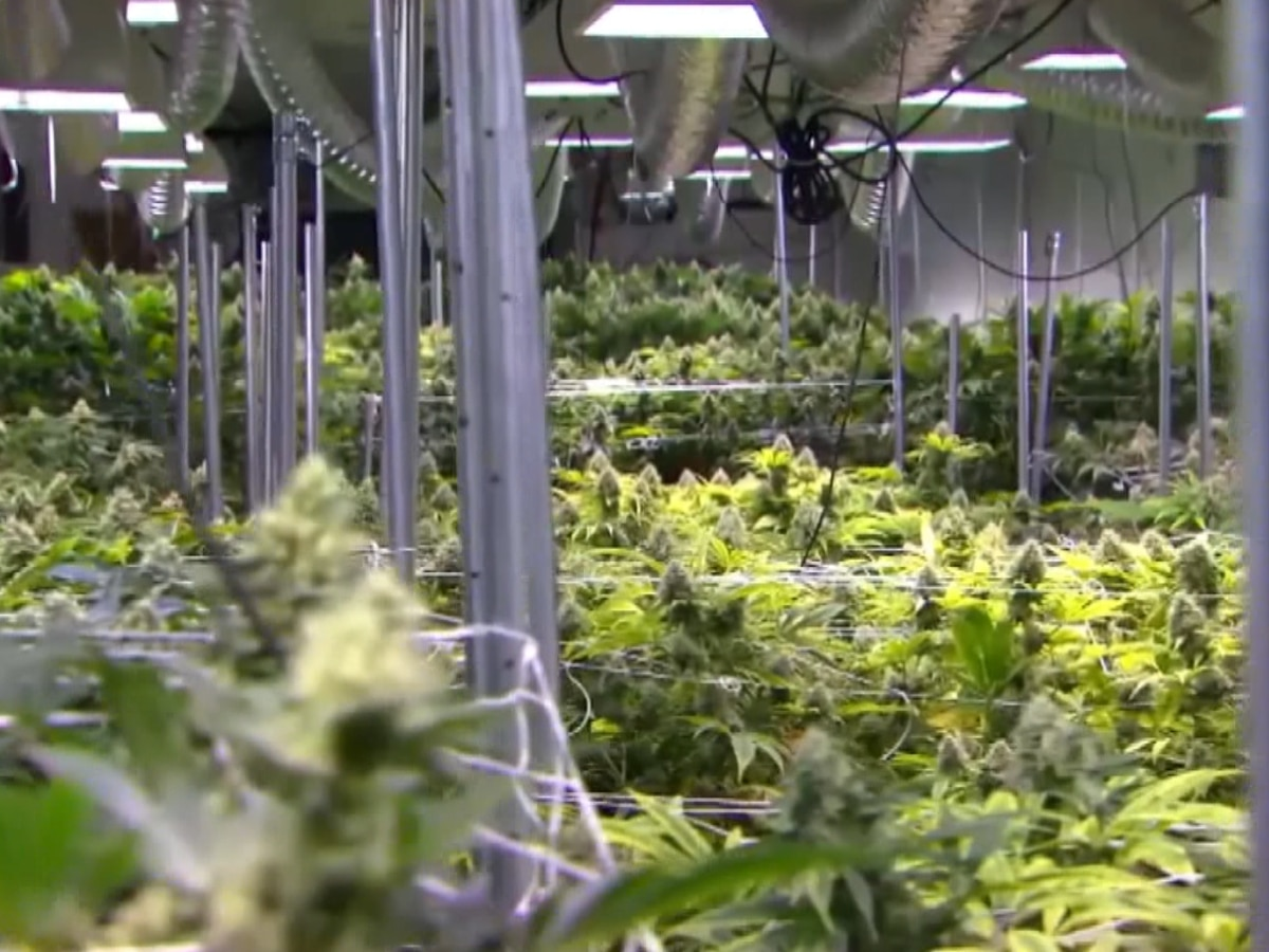 Southern Ill. government members figuring out weed regulations