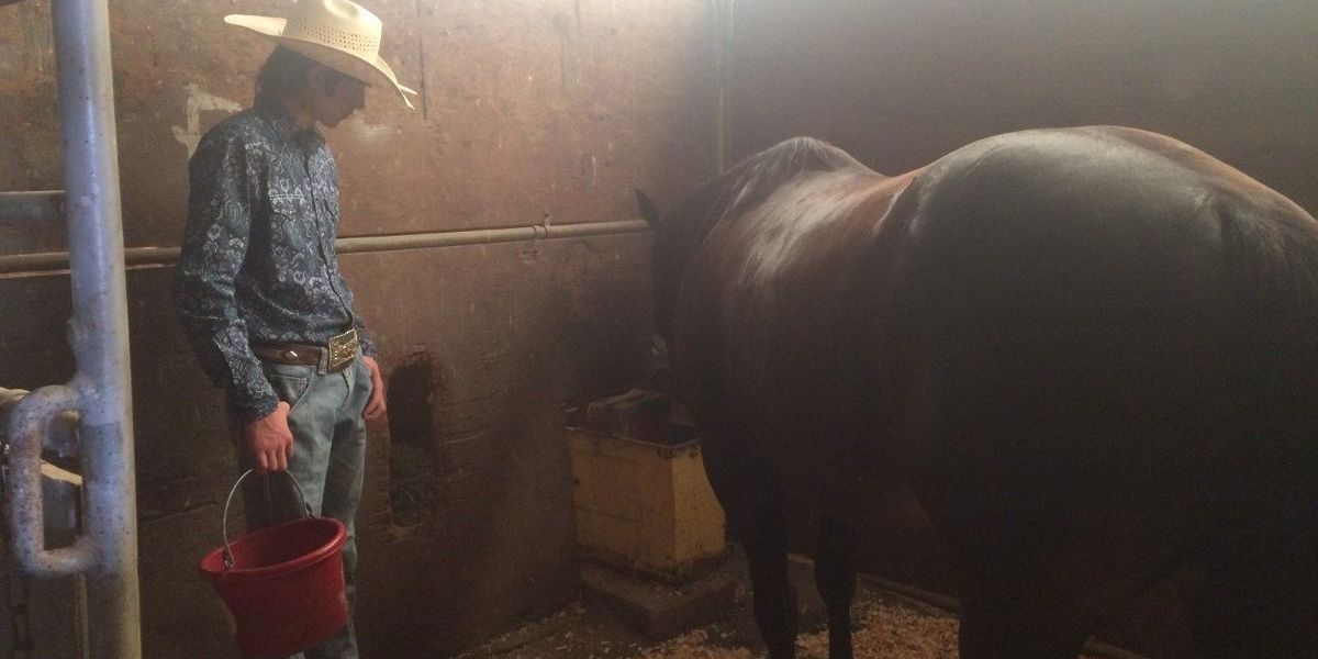 Giant City Stables open during eclipse weekend