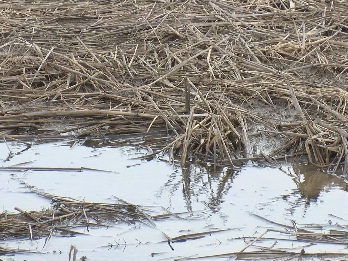 Farmer double whammy: Coronavirus and wet fields
