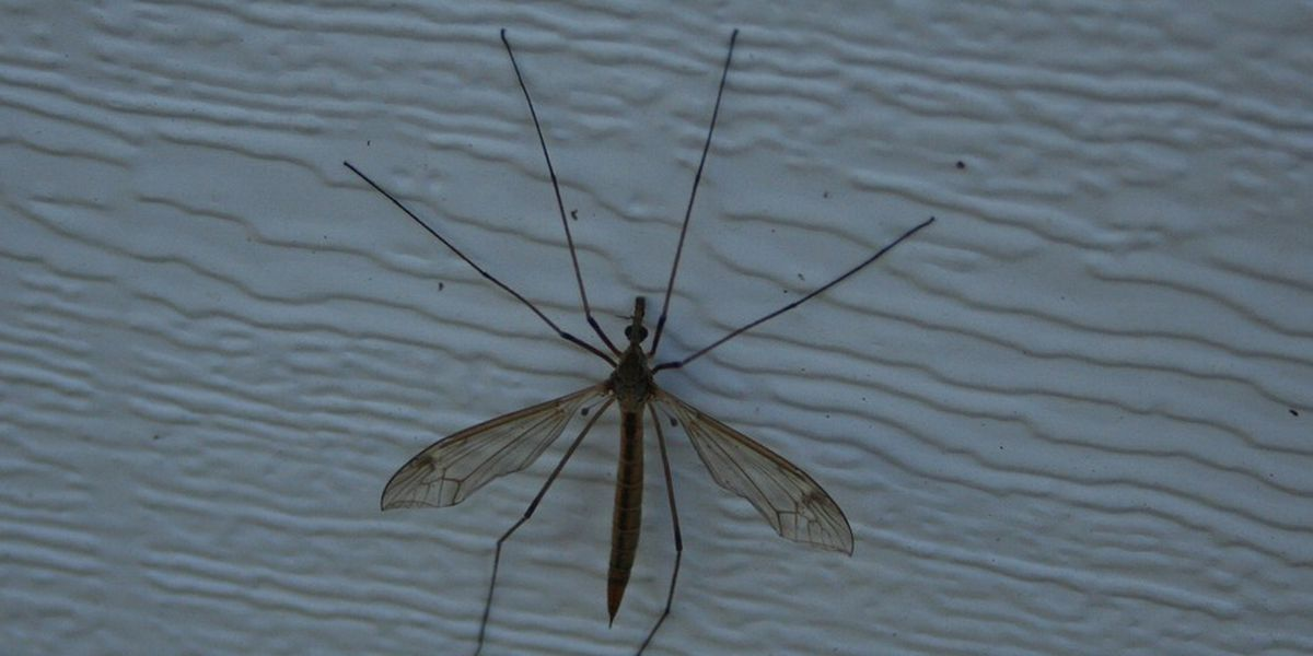 First West Nile death confirmed in IL for 2018