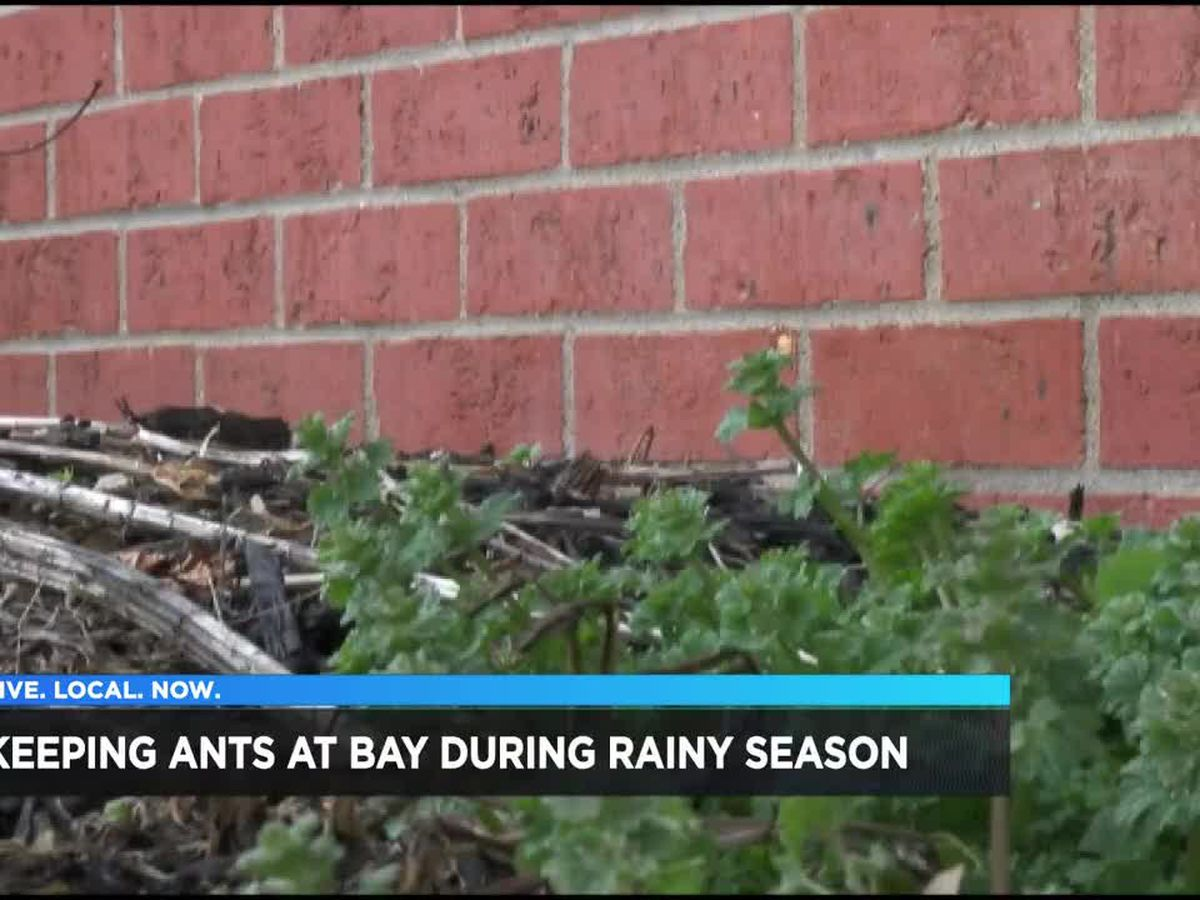 Bug expert says to start now to get rid of bugs and pest due to rain