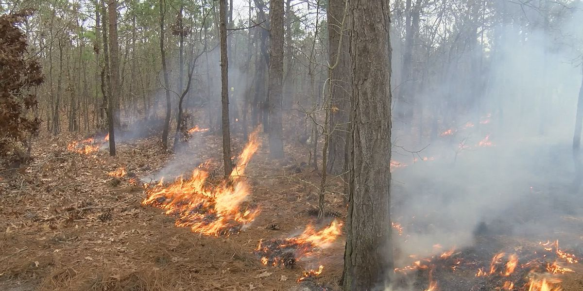 Controlled burns planned for Land Between the Lakes Monday afternoon