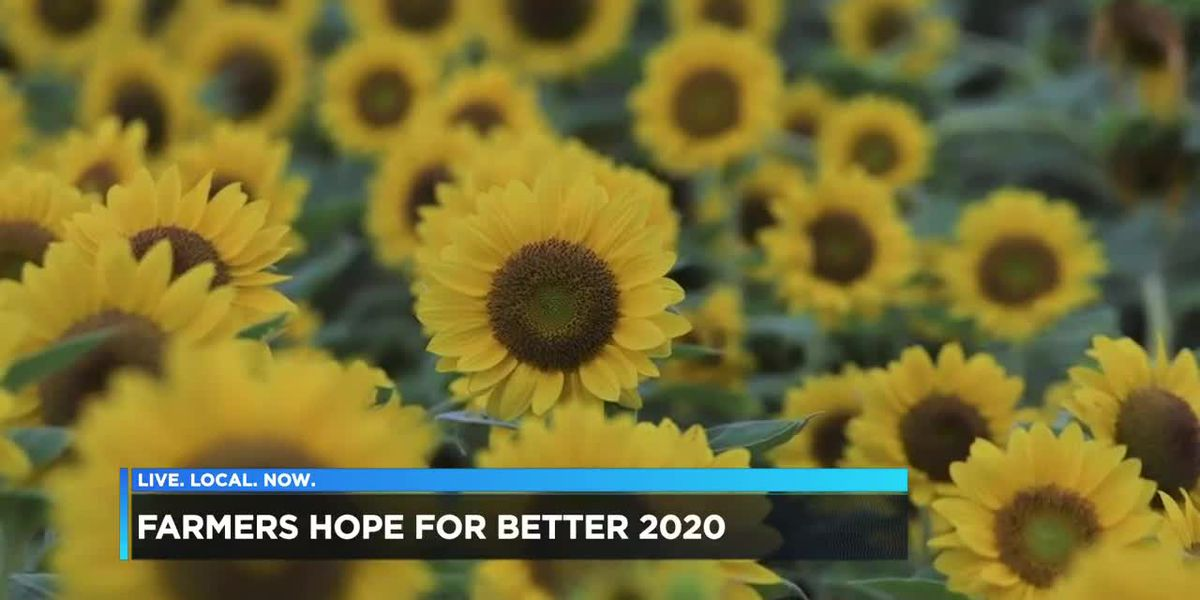 Farmers look ahead to 2020