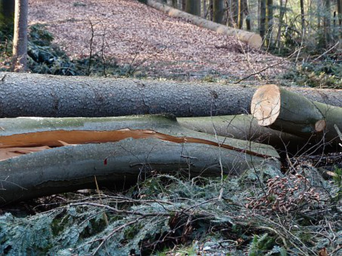 Areas of Land Between the Lakes closed to remove debris
