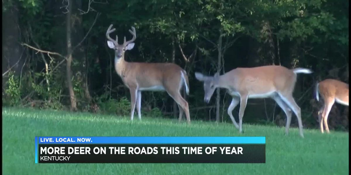 Drivers be aware: Deer are on the move right now