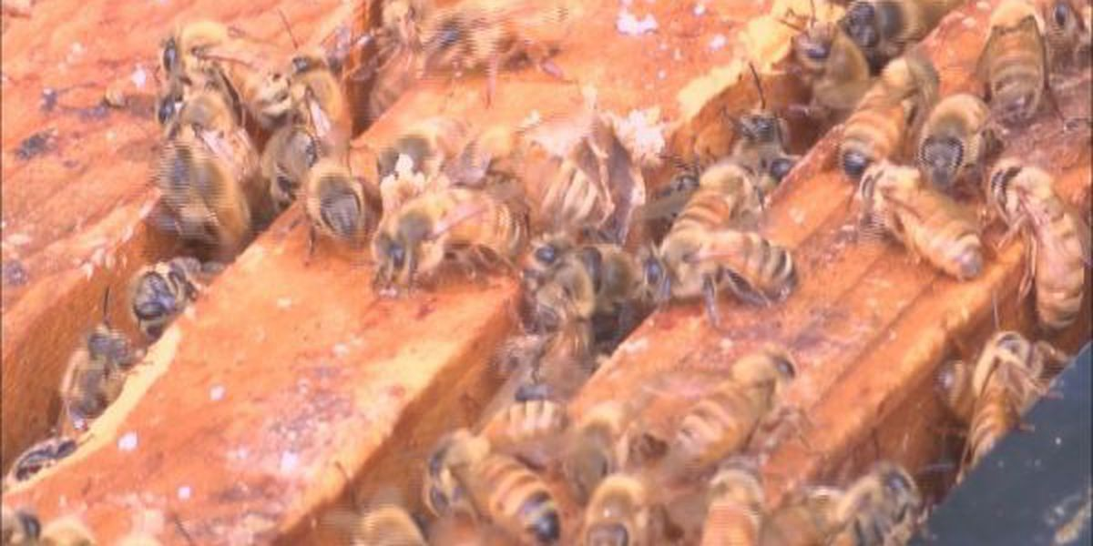 Beekeeper numbers on the rise in Illinois
