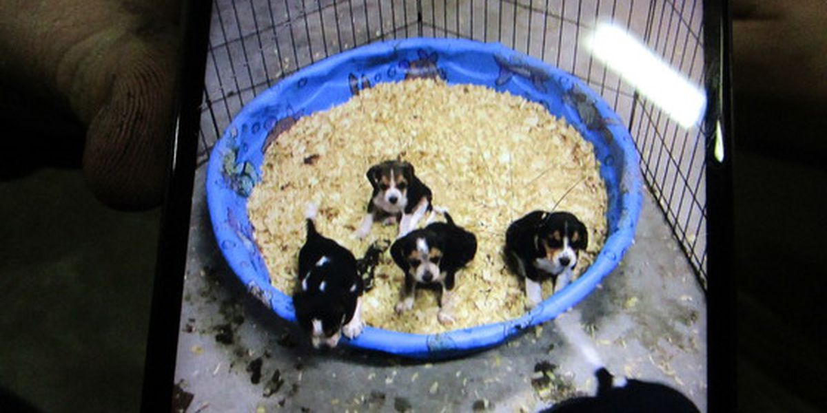 Ky. State Police searching for stolen litter of puppies