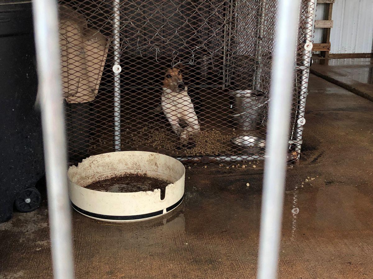 Heartland animal shelter risks closing