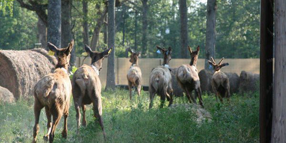 West Virginia to receive another elk shipment from Kentucky