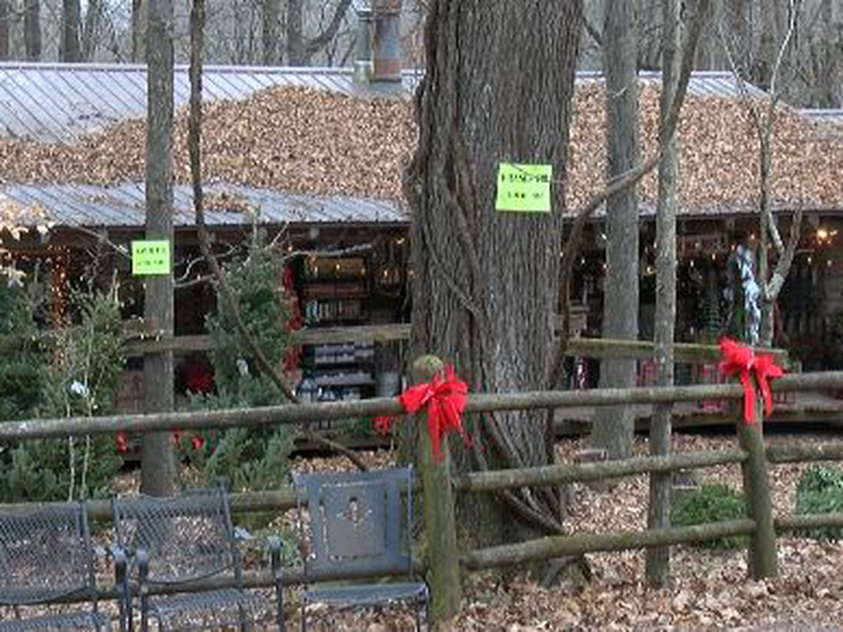 Yule Log Cabin sees uptick in holiday business