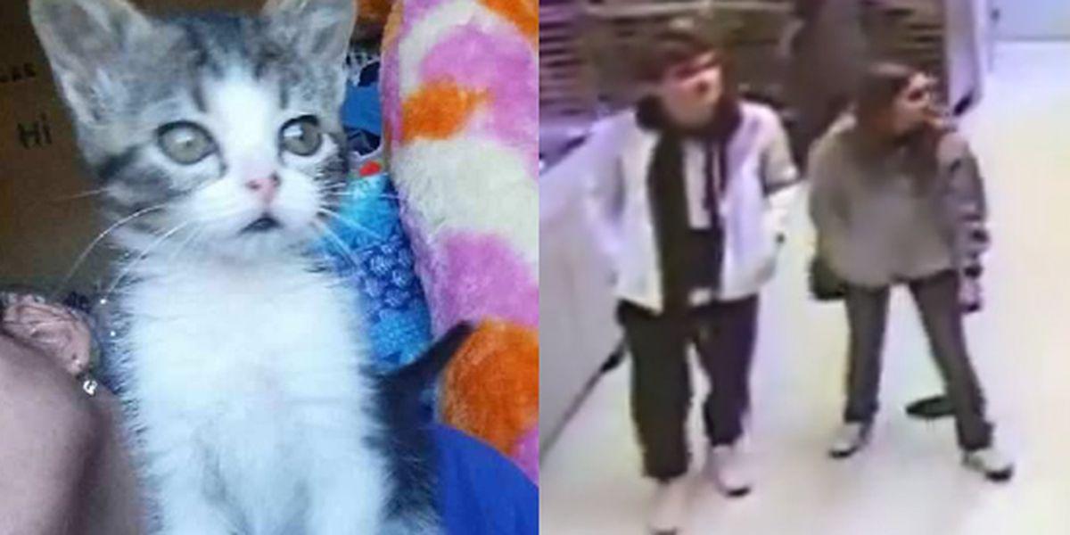 Kitten stolen from animal shelter, returned safely