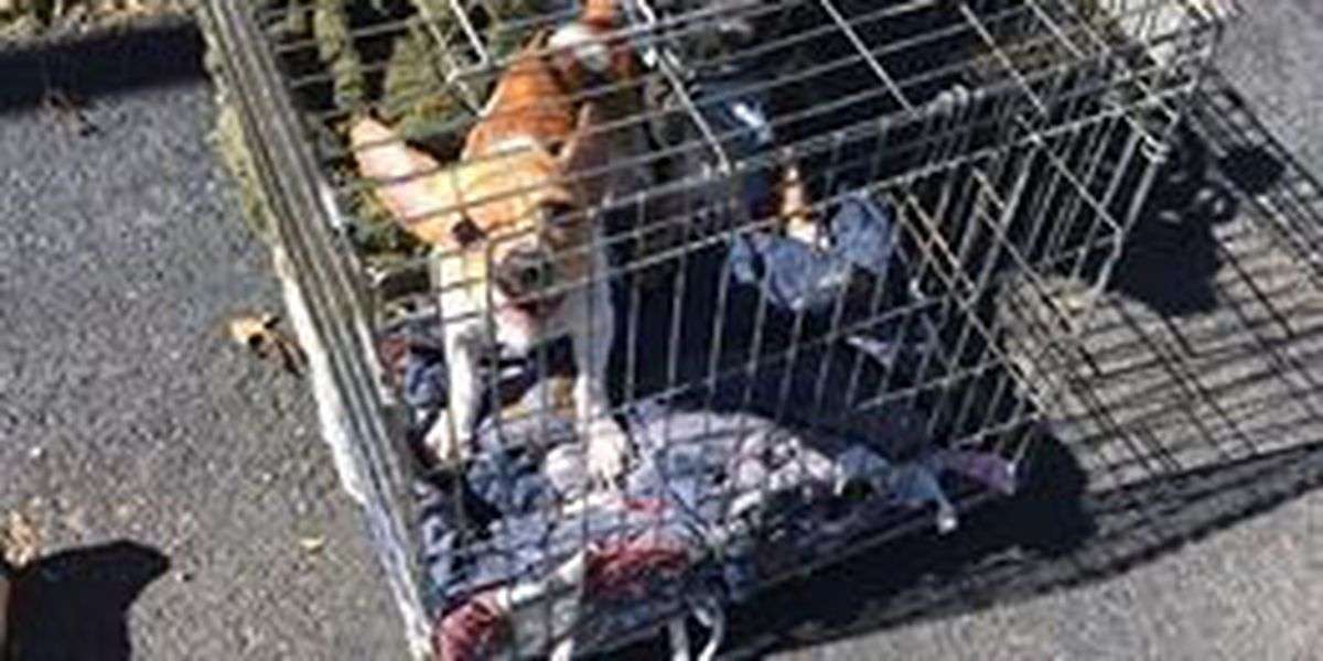Dogs left in crate at Kennett Super 8