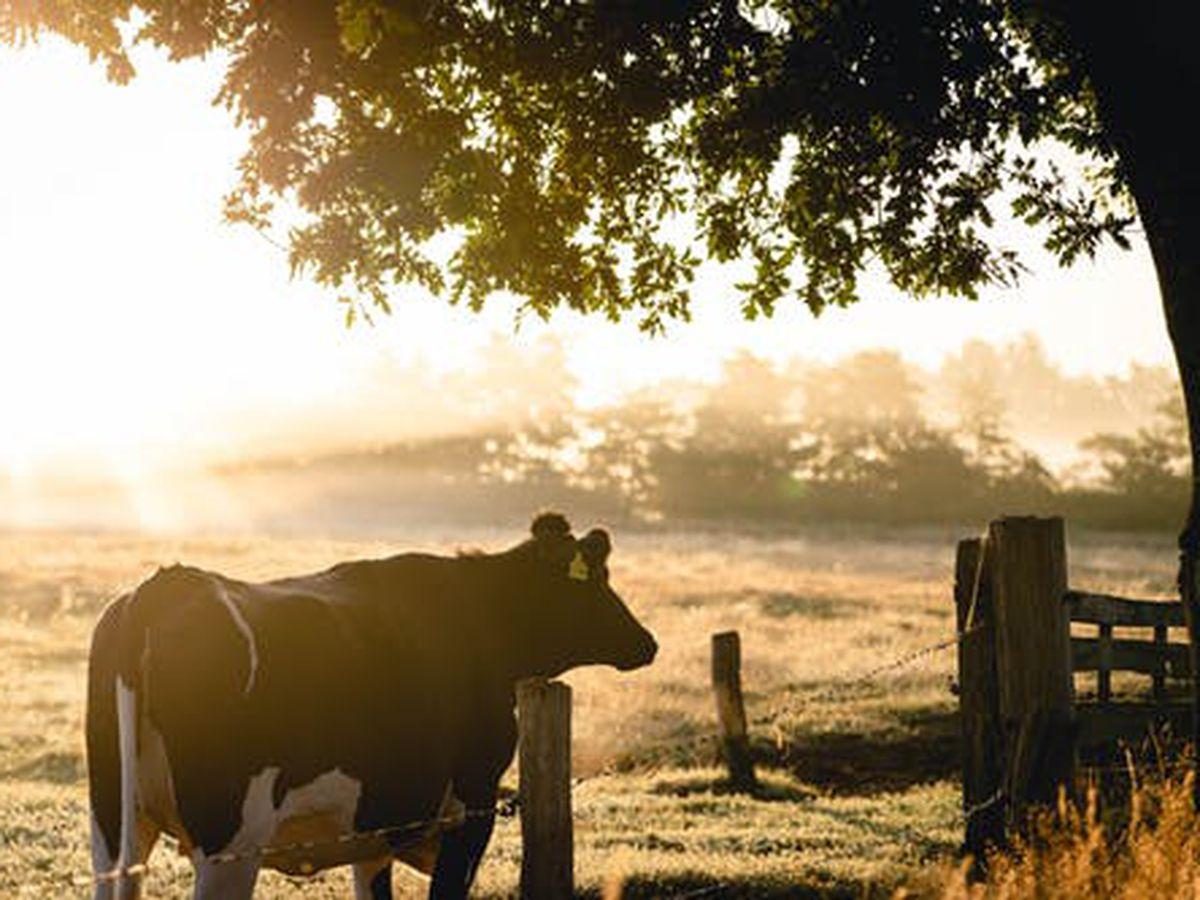 Judge pauses new Missouri law on large farm regulations