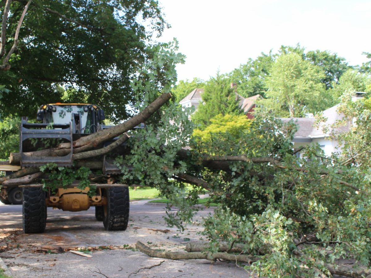 City of Cape Girardeau to provide curbside pickup for fallen limb and storm debris