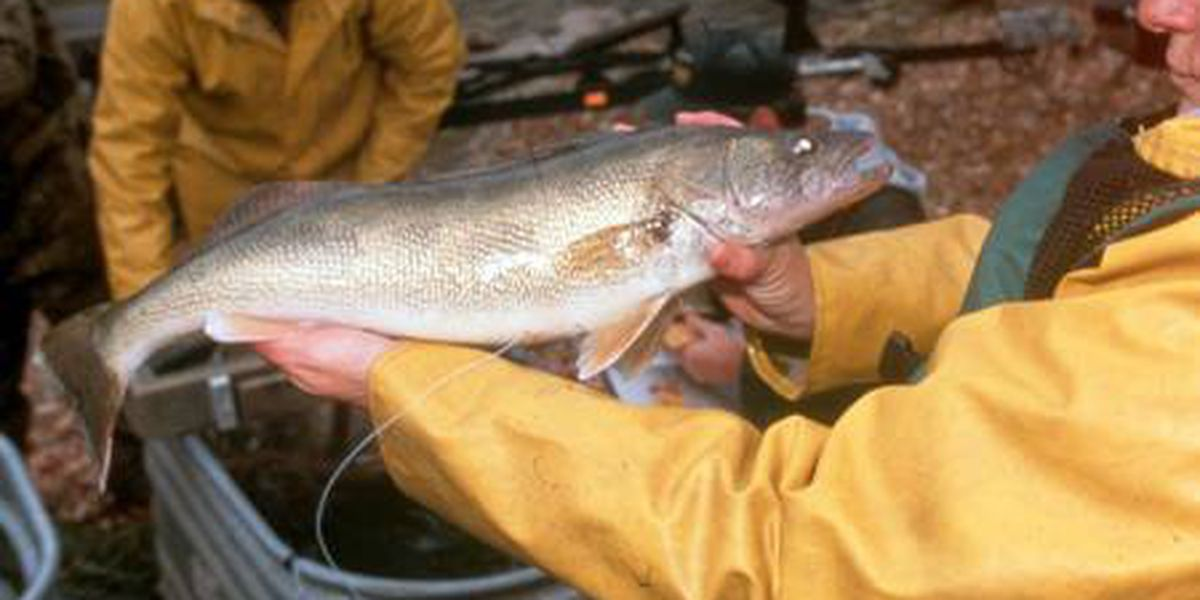 Ohio hunters, anglers can now purchase lifetime licenses