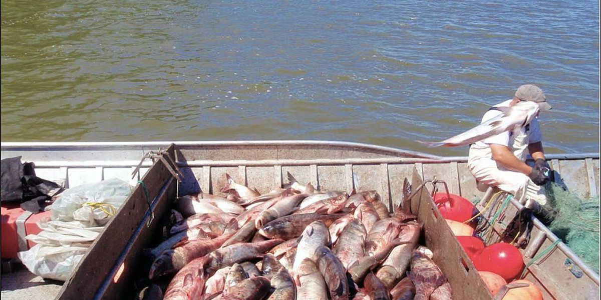 Lawmaker talks threat of Asian Carp in KY