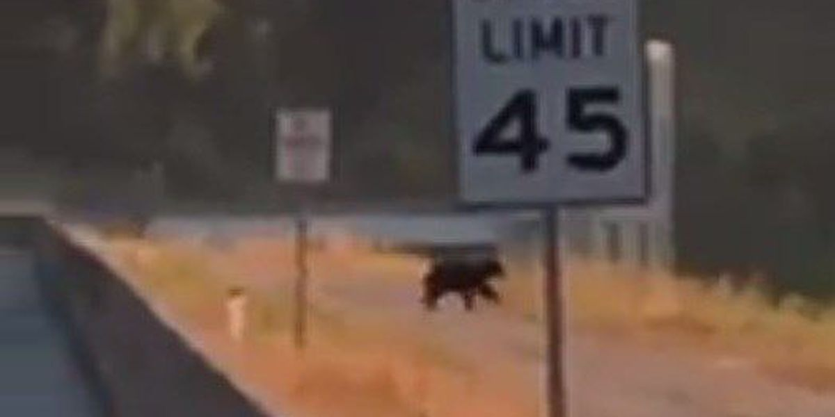 VIDEO: Bear spotted at Clearwater Lake in southeast MO