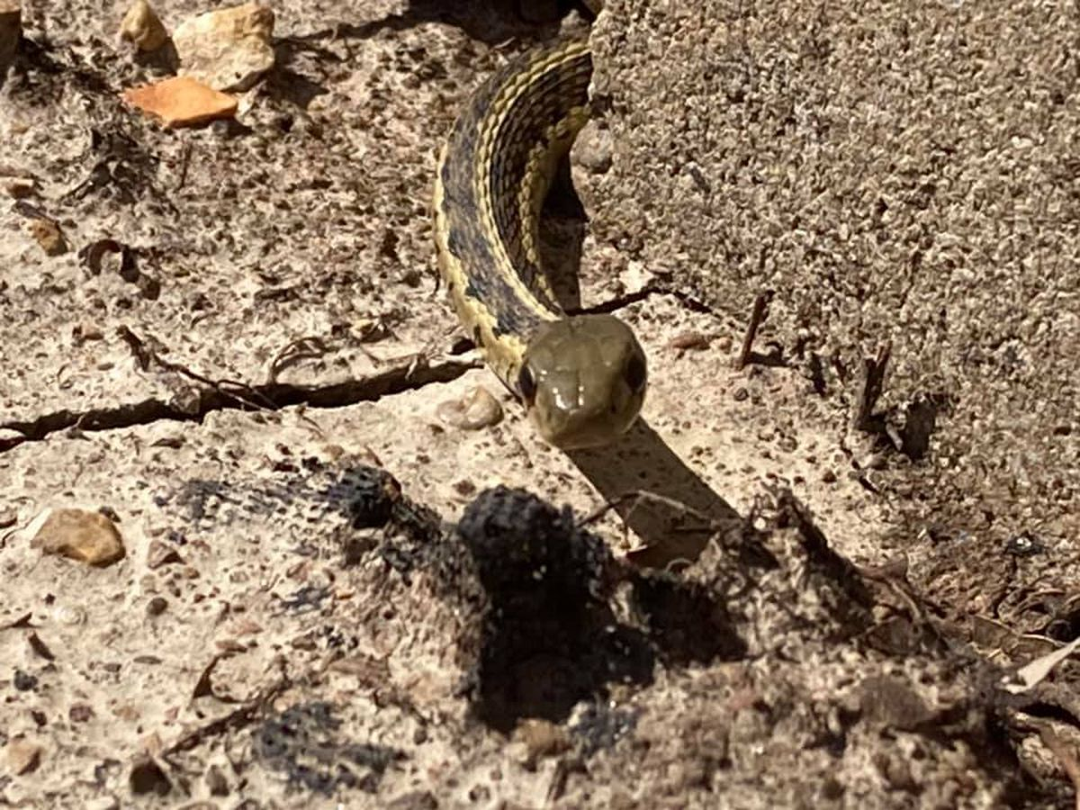 More snake sightings possible with spring-like weather