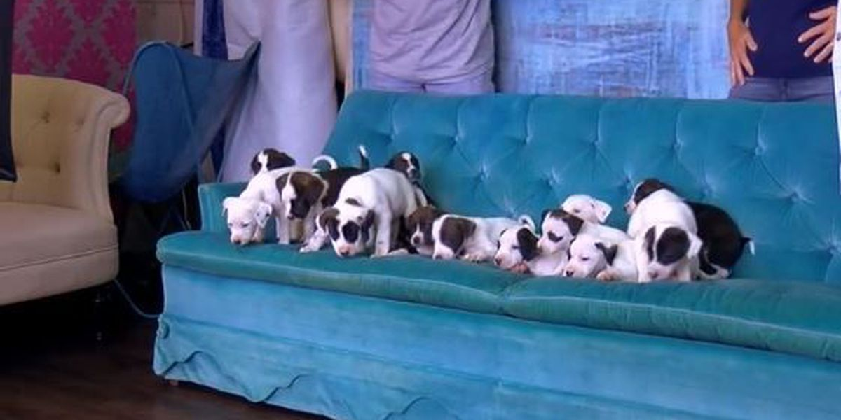 Abandoned dog gives birth to 13 pups who need new homes