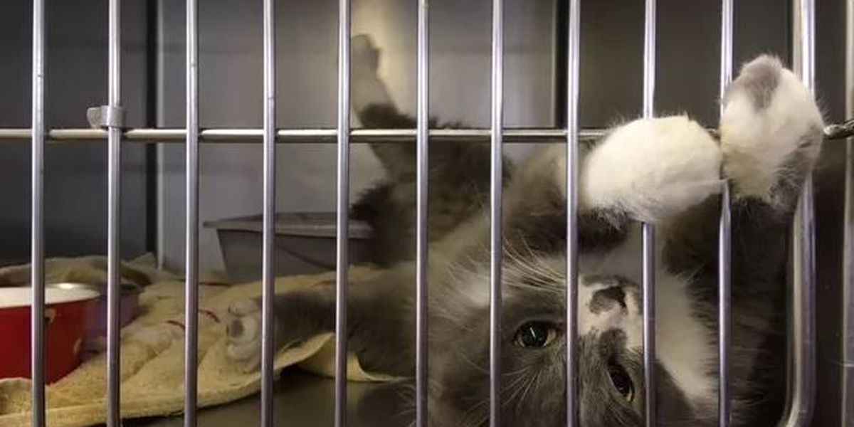 Humane Society of Southeast MO sets goal to save 500 lives