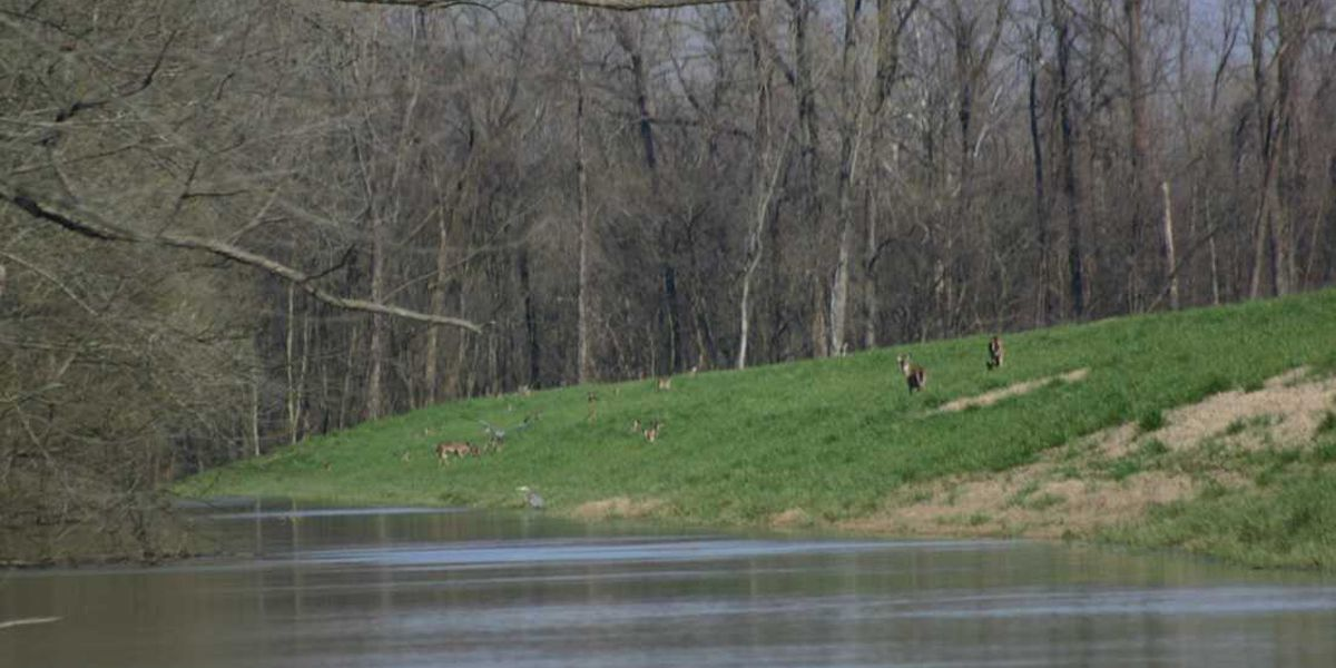 Mississippi River flooding forcing wildlife onto levees, roads