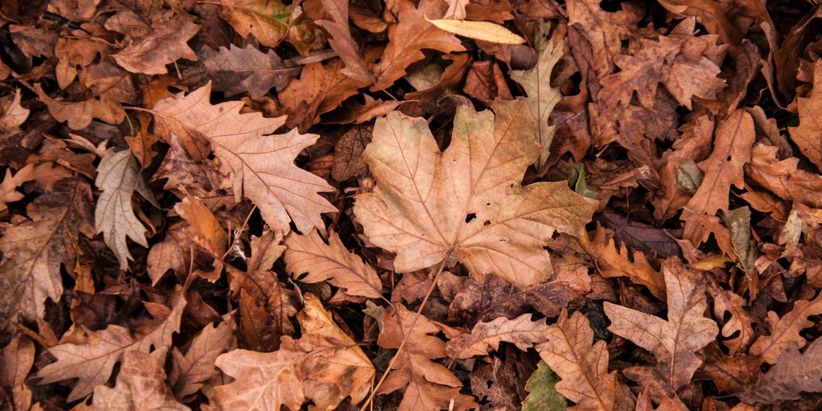 Paducah Compost Facility accepting brush, leaves and yard debris