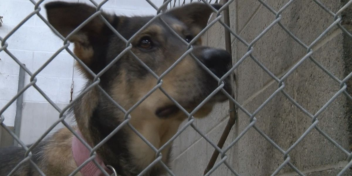 Poplar Bluff Police Department to hold animal cruelty course