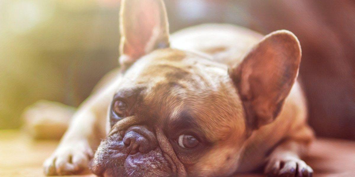Humane Society of Missouri warns of the dangers of summer heat