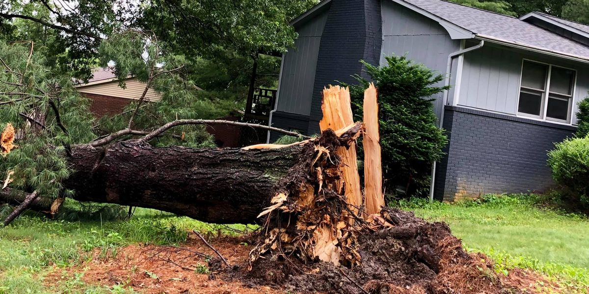 Tree taken out by severe weather had sentimental meaning to Cape Girardeau resident