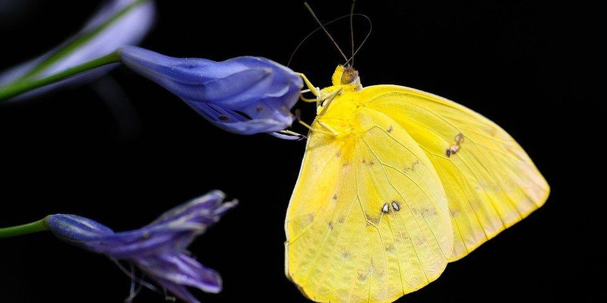 Want to learn about butterflies and see wildflowers? Here's your chance!