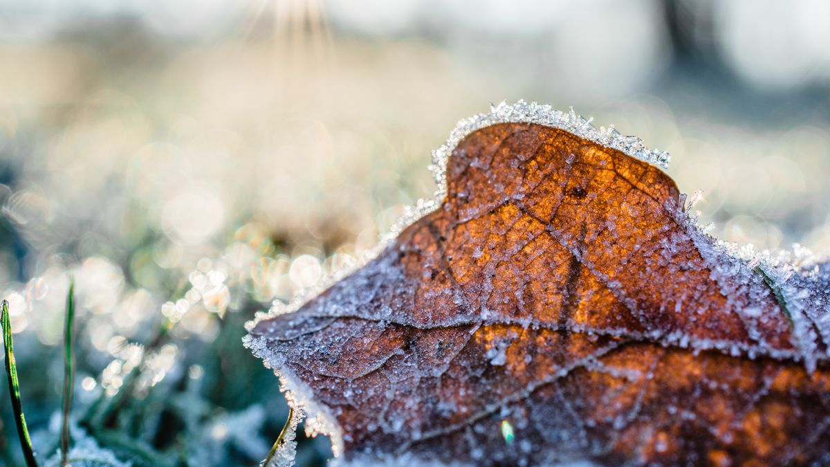 First Alert: Cool afternoon, frost likely tonight
