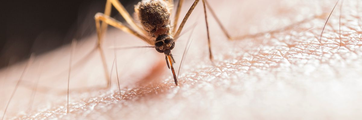 Deadly, rare, mosquito-borne virus is now in Indiana