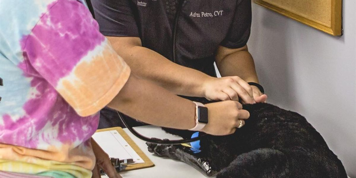 Vet assistant program back at Illinois colleges in January