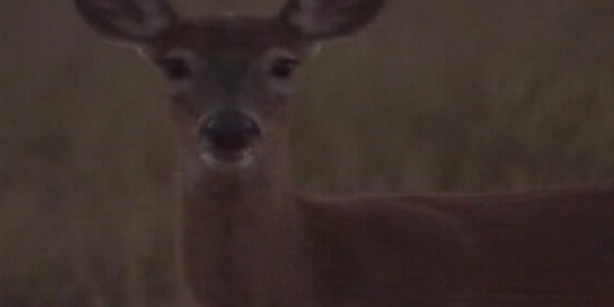 Watch out for deer during the rut
