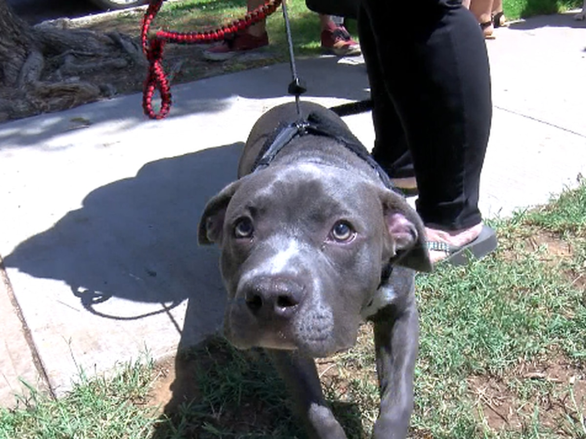 Keeping pets safe during Fourth of July holiday