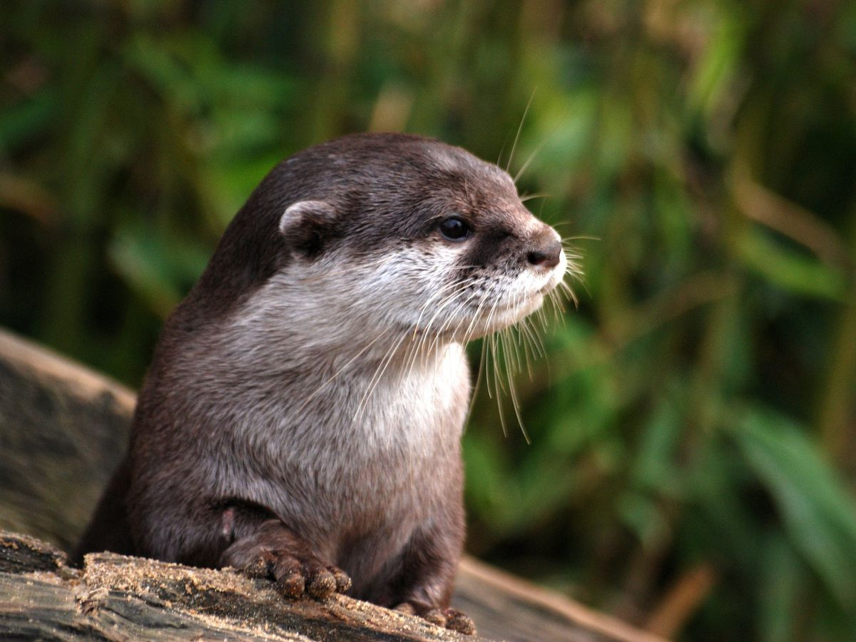 St. Louis Aquarium needs help naming otter pups
