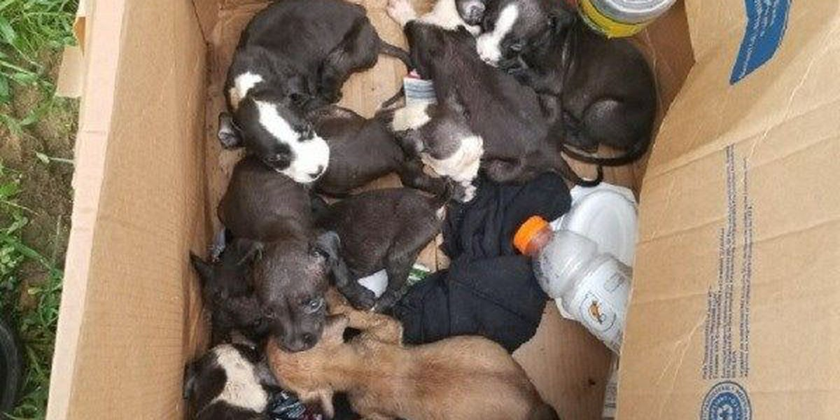 Poplar Bluff Animal Control search for owners of 8 puppies left in box