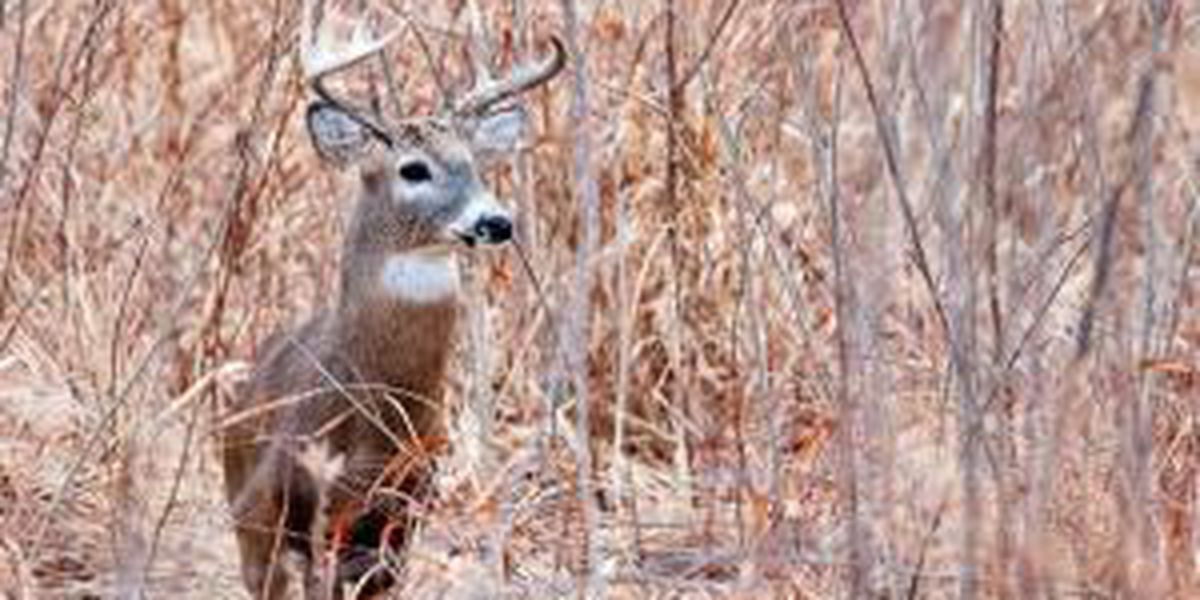 City of Cape Girardeau releases more info. on managed deer hunt for fall 2021