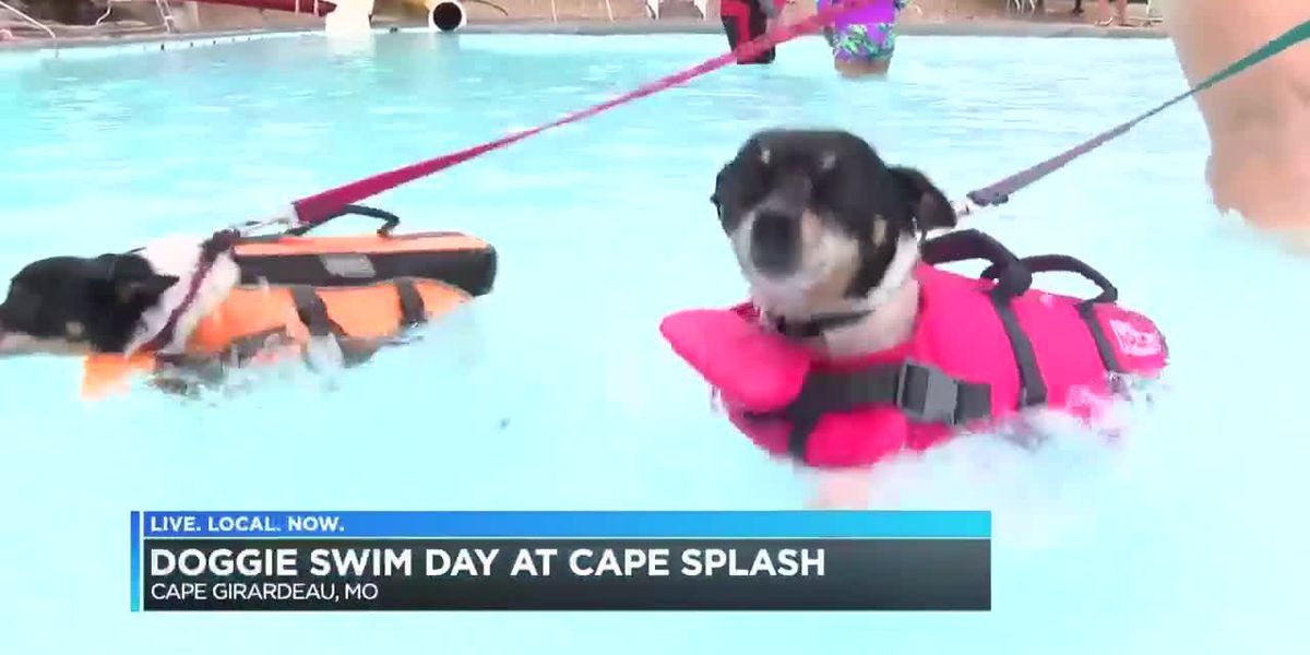 Cape Splash doggie swim day